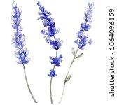 Violet Lavender. Floral...