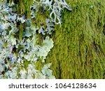 Mushrooms On Tree Moss