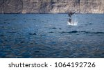 dolphin trip. here you can... | Shutterstock . vector #1064192726