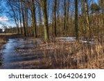 Frozen Swamp In Kampinos...