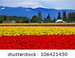 Red Yellow Tulips Flowers Mt...