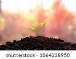 the seedling are growing in the ... | Shutterstock . vector #1064238950