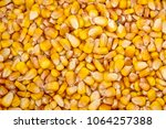 top view of many loose kernels... | Shutterstock . vector #1064257388