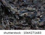 rainforest in australia | Shutterstock . vector #1064271683