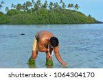 young attractive and exotic... | Shutterstock . vector #1064304170