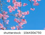 pink blossoms on the branch... | Shutterstock . vector #1064306750