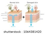 sectional view of the skin... | Shutterstock .eps vector #1064381420