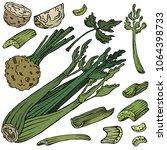 celery colored illustration ... | Shutterstock .eps vector #1064398733