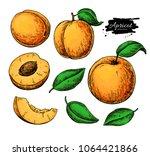 Apricot Vector Drawing Set....