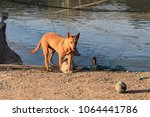 mother dog take care her... | Shutterstock . vector #1064441786
