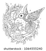 hummingbird coloring book | Shutterstock .eps vector #1064555240