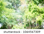 natural blur background.   Shutterstock . vector #1064567309