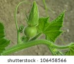 pumpkin plant fragment with bud | Shutterstock . vector #106458566