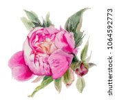 watercolor  flowers isolated on ... | Shutterstock . vector #1064592773