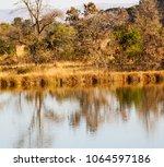 in lesotho mlilwane wildlife... | Shutterstock . vector #1064597186