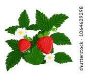 red ripe strawberry. berry bush ... | Shutterstock .eps vector #1064629298