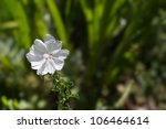 Delicate White Petals With Pin...