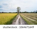 different rice field before and ... | Shutterstock . vector #1064671649