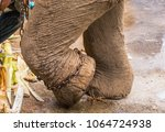 elephant front legs and chains   Shutterstock . vector #1064724938