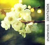 spring flowers. sakura | Shutterstock . vector #1064762606