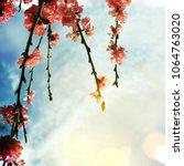 spring flowers. sakura | Shutterstock . vector #1064763020