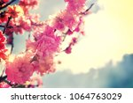 spring flowers. sakura | Shutterstock . vector #1064763029