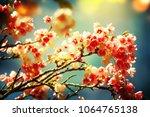 spring flowers. sakura | Shutterstock . vector #1064765138