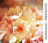 spring flowers. sakura | Shutterstock . vector #1064765150