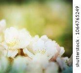 spring flowers. sakura | Shutterstock . vector #1064765249