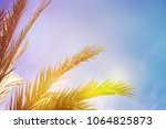 palm trees on the background of ... | Shutterstock . vector #1064825873