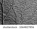 leaf texture black and white  ...   Shutterstock . vector #1064827856