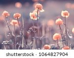 vintage background little... | Shutterstock . vector #1064827904