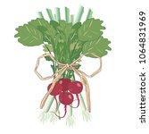 vegetable fresh with green... | Shutterstock .eps vector #1064831969