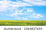yellow rapeseed field and blue... | Shutterstock . vector #1064837654