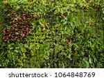 Herb Wall  Plant Wall  Natural...