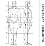diagram of the human body. how... | Shutterstock .eps vector #1064875019