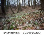 glade in the forest with many...   Shutterstock . vector #1064910200
