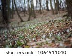 glade in the forest with many... | Shutterstock . vector #1064911040