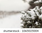 Small photo of whinny bush covered in fresh snow