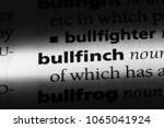 bullfinch word in a dictionary. ... | Shutterstock . vector #1065041924