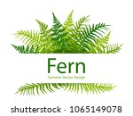 fern frond tropical leaves...   Shutterstock .eps vector #1065149078