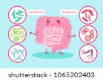 intestine with health concept... | Shutterstock .eps vector #1065202403