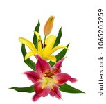 beautiful lily flower isolated... | Shutterstock . vector #1065205259