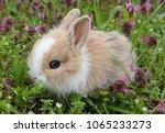 Stock photo cute bunny rabbit in colorful meadow beautiful spring scene 1065233273