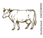 cow domestic animal ink sketch... | Shutterstock .eps vector #1065258950