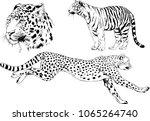 vector drawings sketches... | Shutterstock .eps vector #1065264740