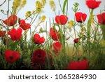 poppiest. spring mood | Shutterstock . vector #1065284930