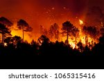 Forest Fire  Pinus Pinaster ...