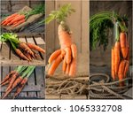 collage with fresh carrot on... | Shutterstock . vector #1065332708