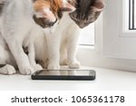 Stock photo two cats sit on the windowsill and look at the smartphone screen 1065361178